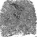 fingerprint8